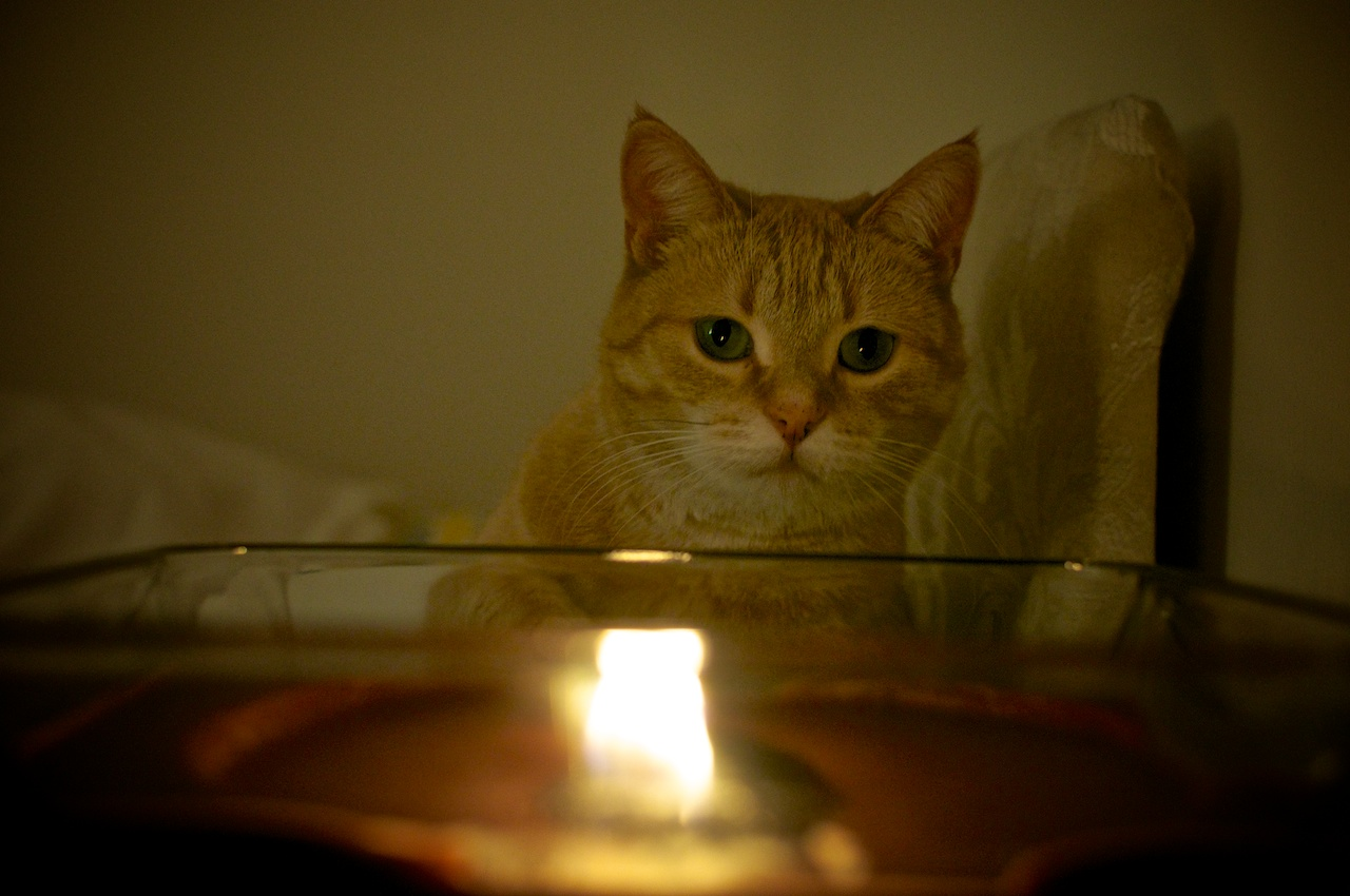 El Gato del Fuego
