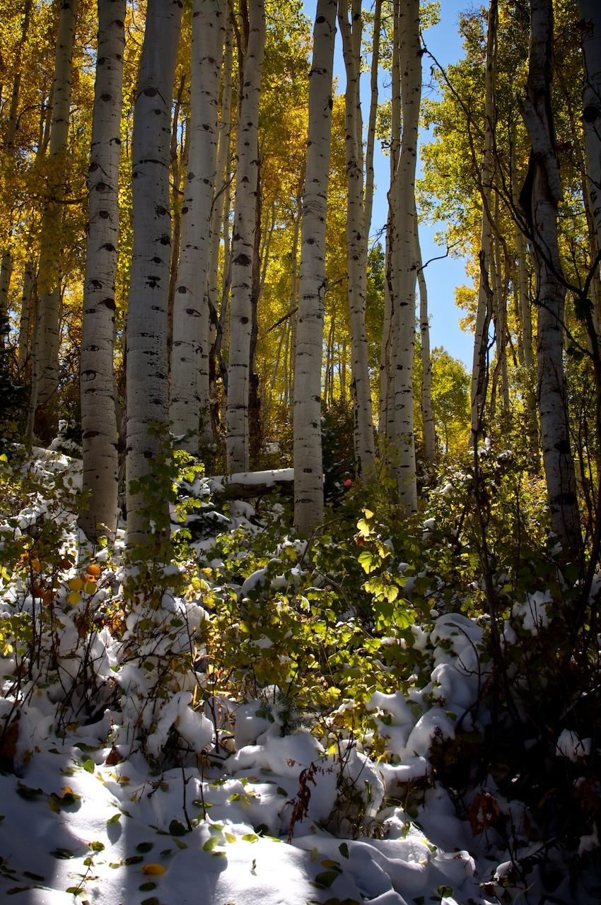 2013 Articulate Retreat Montage, Deer Valley, Utah